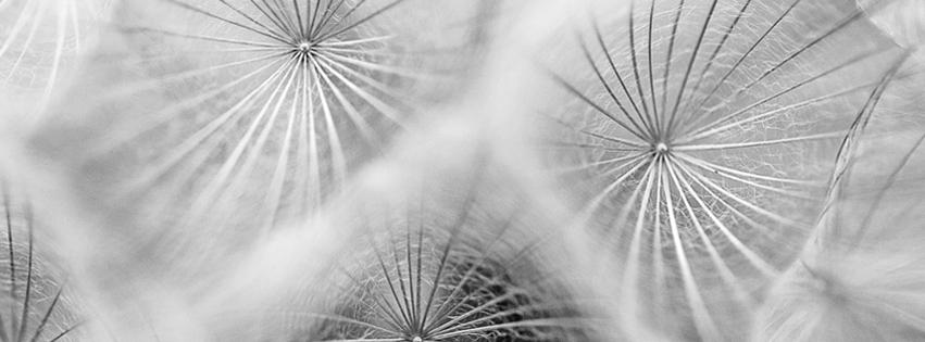 Nicci-Talbot_Facebook-Header-Flowers
